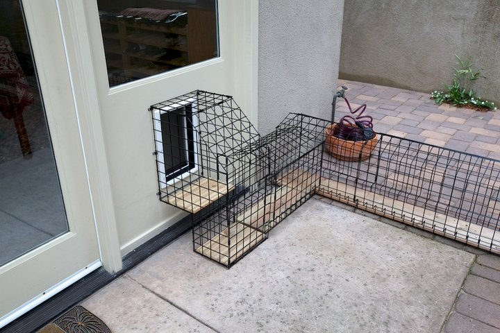 Cat door for shed