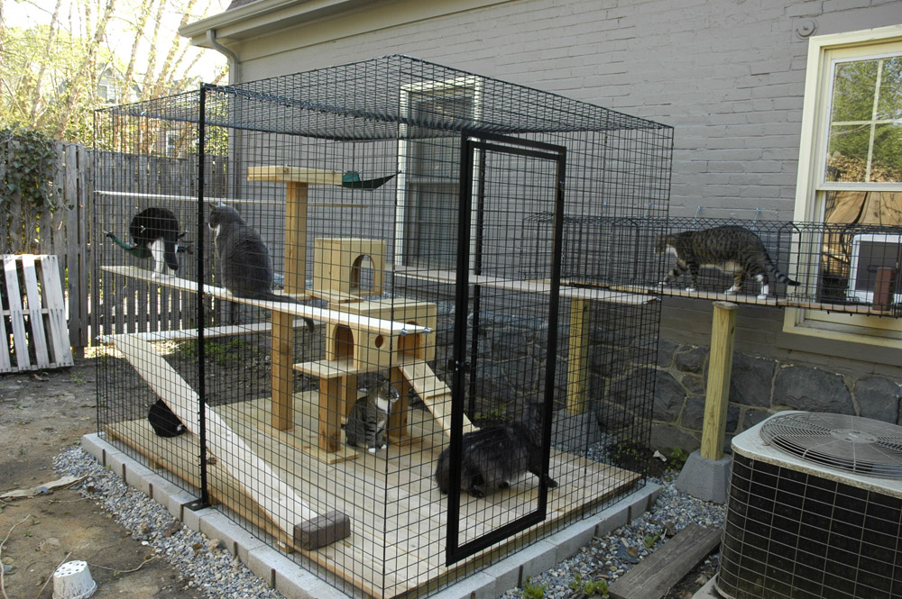 cat enclosure idea side yard pet outdoor plays backyard cat stuff crazy cat lady animal. Black Bedroom Furniture Sets. Home Design Ideas