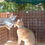 Kitty playground, catbitat 071