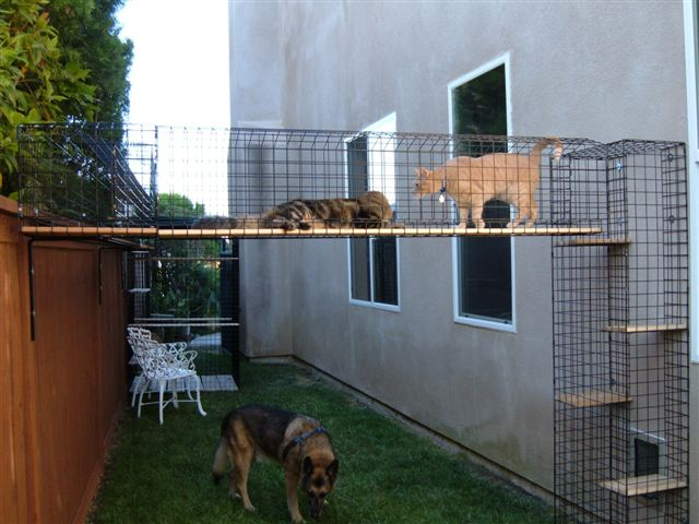 Kitty playground, catbitat 020
